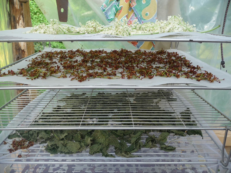 sejour-randonee-plantes