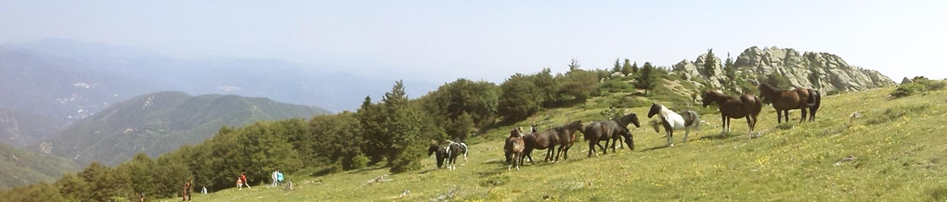 vacances-nature-66-chevaux